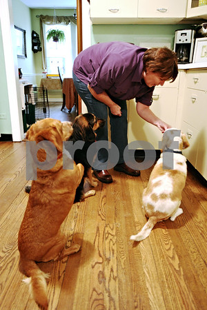 Rob Winner – rwinner@daily-chronicle.com<br /> <br /> After arriving home from work, Kim Dale of Lombard gives a treat to each of her three dogs, including Charlie (right), also known as Beagle #59. Charlie was adopted from the DeKalb TAILS  where he arrived after a hoarding incident nearly two years ago.<br /> <br /> 10/09/2009