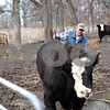 Beck Diefenbach  -  bdiefenbach@daily-chronicle.com<br /> <br /> Dale Rhode leads one of his simmental bulls out of its pen at his ranch outside of Kingston, Ill., on Wednesday April 15, 2009. Historic Angus Award for fifty years of angus beef production.