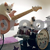 Randi Stella – rstella@daily-chronicle.com<br /> <br /> (from left) Pinky, Fiji and Nue play their instruments in their band The Rockcats at the Midwest Museum of Natural History in Sycamore, Ill., on Sunday August 23rd as part of Amazing Animals, trained by Samantha Martin from Chicago.
