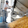 Rob Winner – rwinner@daily-chronicle.com<br /> <br /> D.J. Meszaros closes the door on a hopper trailer after depositing corn into a pit at the Elburn Coop in Maple Park, Ill. on Wednesday October 6, 2010.