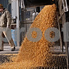 Beck Diefenbach  -  bdiefenbach@daily-chronicle.com<br /> <br /> Grain pit operator Kevin Peterson waits a corn is dropped off at the Elburn Cooperative Company in maple Park, Ill., on Wednesday Jan. 27, 2010.