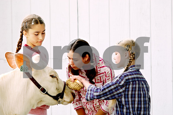 Rob Winner  -  rwinner@daily-chronicle.com<br /> <br /> Sisters Martha Hoffman, 12, Trisha Hoffman and Miriam Hoffman, 10, prepare their milking shorthorn dairy cow, Snowdrop, for judging at the Sandwich Fair in Sandwich, Ill. on Thursday September 9, 2010.