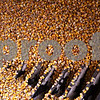 Beck Diefenbach  -  bdiefenbach@daily-chronicle.com<br /> <br /> Corn harvested from a local farm falls through the grating at the Elburn Cooperative Company in maple Park, Ill., on Wednesday Jan. 27, 2010.