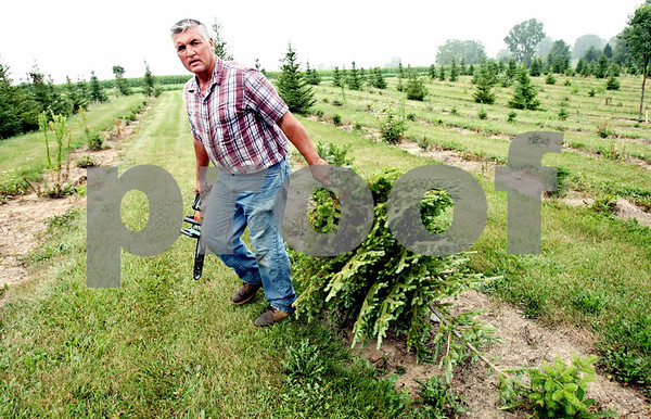 Rob Winner – rwinner@daily-chronicle.com<br /> <br /> On the morning of Thursday July 22, 2010, Bob Faivre, owner of Camelot Christmas Tree Farm in DeKalb, Ill., carries away one of his trees that had been affected by a drought that occurred sometime between 2003 and 2004.