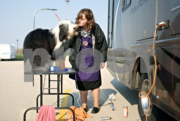 Rob Winner – rwinner@daily-chronicle.com<br /> <br /> Outside the Convocation Center in DeKalb, Ill. on Saturday April 10, 2010, Melissa Engelking, of Riverwoods, Ill., prepares her Bearded Collie, Ringo, for the Kennel Club of Yorkville All Breed Dog Show.