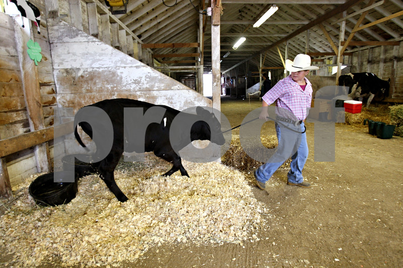 Rob Winner – rwinner@daily-chronicle.com<br /> <br /> Malta resident Amber Pigott, 10, walks her bucket calf named Friday before judging at the 4-H Livestock Fair at the Sandwich Fairgrounds in Sandwich, Ill. on Saturday July 31, 2010.