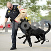 Beck Diefenbach  -  bdiefenbach@daily-chronicle.com<br /> <br /> Nick, a german shepherd with the DeKalb Police Department attempts to subdue Deputy Toby Jennings during an apprehension demonstration at the National Night Out event held in the parking lot of Target in DeKalb, Ill., on Tuesday Aug. 3, 2010.