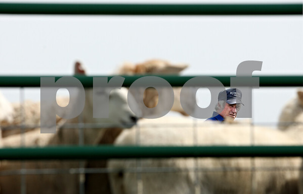 Rob Winner – rwinner@daily-chronicle.com<br /> <br /> Bobby Dalziel looks toward a herd of sheep while working with a five month old Border Collie during a sheepdog training clinic at Heatherhope Farm in Sycamore, Ill. on Tuesday April 20, 2010.