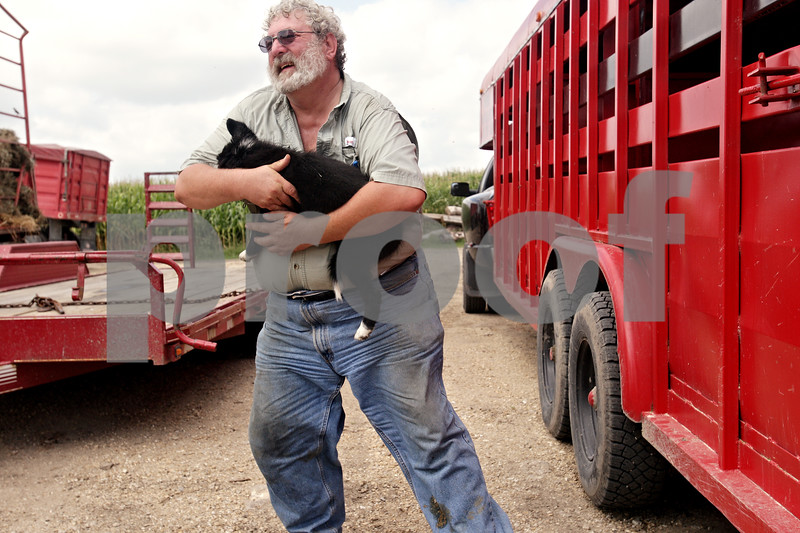 """Beck Diefenbach  -  bdiefenbach@daily-chronicle.com<br /> <br /> Chauncy Watson picks up his new puppy, Cinders, while working on his farm on Saturday August 21, 2010. Cinders was resting under the trailer when Watson picked the puppy up. """"You're too valuable to me, my little friend,"""" he said."""