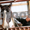"Beck Diefenbach - bdiefenbach@daily-chronicle.com<br /> <br /> Debbie Kirby, of Cortland, grooms her horse Cierra at Runaway Ranch in Sycamore, Ill., on Tuesday March 9, 2010. Despite feeling the strains of the down economy, Debbie would rather cut her personal budget than lose her horse. ""It's like having a boyfriend or girlfriend,"" she said. ""You make adjustments."""