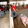 Rob Winner  -  rwinner@daily-chronicle.com<br /> <br /> 13-year-old Bailey Martenson, of Shabbona, guides a crossbred barrow during judging at the Sandwich Fair in Sandwich, Ill. on Thursday September 9, 2010.