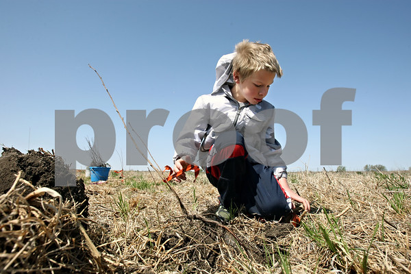 Rob Winner – rwinner@daily-chronicle.com<br /> <br /> Seth Wickens-Walther, 8, of DeKalb, marks the location of a newly planted shrub with a ribbon at the Afton Forest Preserve in DeKalb, Ill. on Saturday April 17, 2010.