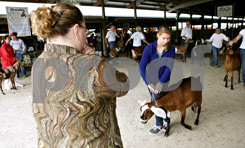 Rob Winner  -  rwinner@daily-chronicle.com<br /> <br /> American Dairy Goat Association judge Juli Huffman (left) looks over 14-year-old Susan Reed's nubian doe during goat judging at the Sandwich Fair in Sandwich, Ill. on Thursday September 9, 2010.<br /> <br /> **Huffman is from Noblesville, Ind. and Reed is from Crown Point, Ind.**