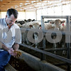 Rob Winner – rwinner@daily-chronicle.com<br /> Jamie Willrett checks some feed for his cattle on his farm in Malta, Ill. on Wednesday March 17, 2010. Willrett was recently named one of the master farmers for 2010 by Prairie Farmers magazine.