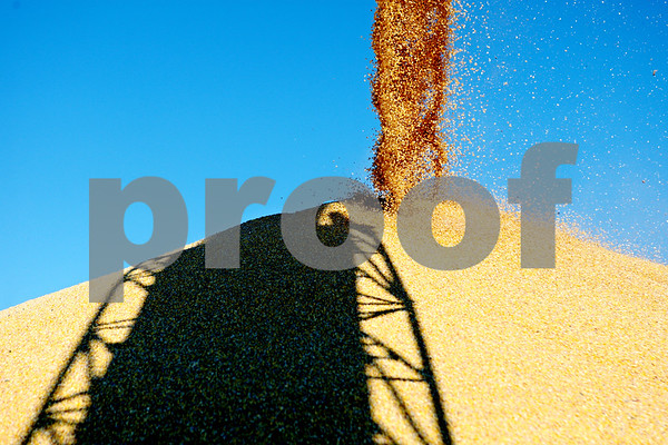 Rob Winner – rwinner@daily-chronicle.com<br /> <br /> Corn collects in a pile at the end of a conveyor belt within an outdoor storage area at the Elburn Coop in Maple Park, Ill. on Wednesday October 6, 2010.