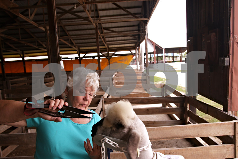 "Beck Diefenbach – bdiefenbach@daily-chronicle.com<br /> <br /> Myrna Sanburg, of Gilson, grooms the head of ""Sweet Pea,"" a purebred oxford sheep, in preparation for the open sheep show competition at the Sandwich Fair in Sandwich, Ill., on Monday Sept. 6, 2010."