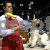 Rob Winner – rwinner@daily-chronicle.com<br /> <br /> Leonardo Garcini, of Henryville, Ind.,  blow dries and brushes off his Wire Fox Terrier at the Convocation Center in DeKalb, Ill. on Saturday April 10, 2010 for the Kennel Club of Yorkville All Breed Dog Show.