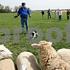 Rob Winner – rwinner@daily-chronicle.com<br /> <br /> Bobby Dalziel works with a five month old Border Collie named Spot during a sheepdog training clinic at Heatherhope Farm in Sycamore, Ill. on Tuesday April 20, 2010.