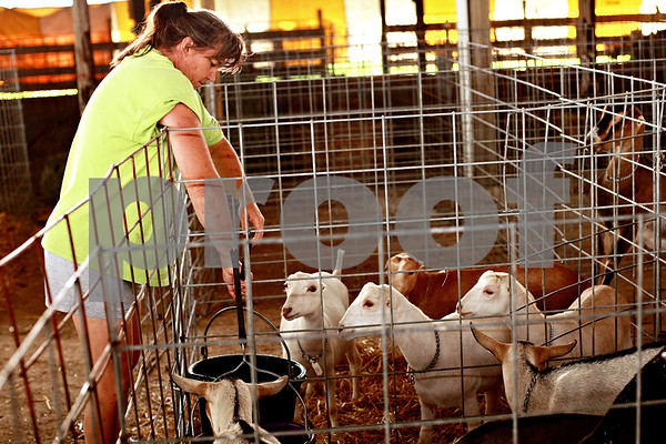 Beck Diefenbach – bdiefenbach@daily-chronicle.com<br /> <br /> Jill Carlson, of Plano, brings water to her goats as she sets up her pens for the Sandwich Fair in Sandwich, Ill., on Monday Sept. 6, 2010.