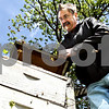 Rob Winner – rwinner@daily-chronicle.com<br /> <br /> Steve Bock, of Honey Hill Orchards in Waterman, Ill., lifts the lid of one of his honeybee hives to check the colony within as hundreds of honeybees fly out of the hive on Friday May 14. 2010. Bock has been maintaining the colonies at the orchard for over 20 years.
