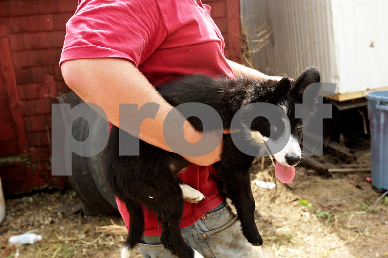 Beck Diefenbach  -  bdiefenbach@daily-chronicle.com<br /> <br /> Chauncy Watson jr. carries the family's new puppy, Cinders, while working on the family farm on Saturday August 21, 2010. One of the Watson's dogs died in the fire.
