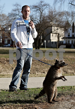 Beck Diefenbach  -  bdiefenbach@daily-chronicle.com<br /> <br /> Kishwuakee College student Nick Welsand walks his pet raccoon Meko on a sunny afternoon on the campus of Northern Illinois University in DeKalb, Ill., on Wednesday March 17, 2010. Welsand got Meko from a breeder and needs to be walked two to three times a day.