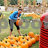 Rob Winner – rwinner@daily-chronicle.com<br /> <br /> Kim Russell of Wessels Family Farm stand in DeKalb, Ill. organizes pumpkins on Wednesday September 22, 2010.