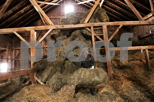 Beck Diefenbach  -  bdiefenbach@daily-chronicle.com<br /> <br /> Kristian Knutson, 24, tosses barrels of hay to be fed to the cattle on his family's farm in Malta, Ill., on Monday Feb. 1, 2010.