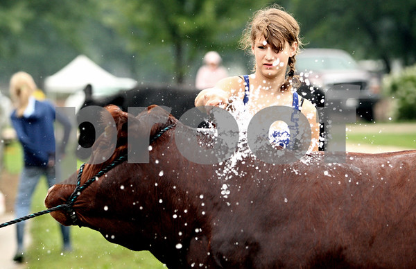 Rob Winner – rwinner@daily-chronicle.com<br /> <br /> DeKalb resident Kelsey Faivre, 15, hoses off a bull before judging at the 4-H Livestock Fair at the Sandwich Fairgrounds in Sandwich, Ill. on Saturday July 31, 2010.