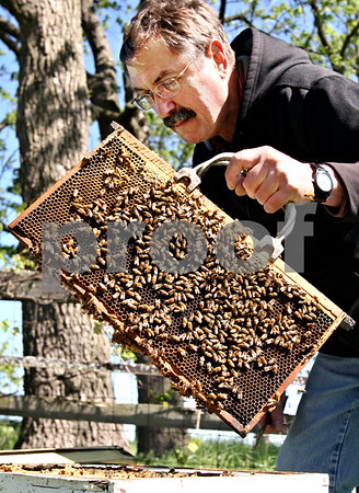 Rob Winner – rwinner@daily-chronicle.com<br /> <br /> Steve Bock, of Honey Hill Orchards in Waterman, Ill., carefully pulls out a frame and foundation from a honeybee hive to examine the colony on Friday May 14, 2010.