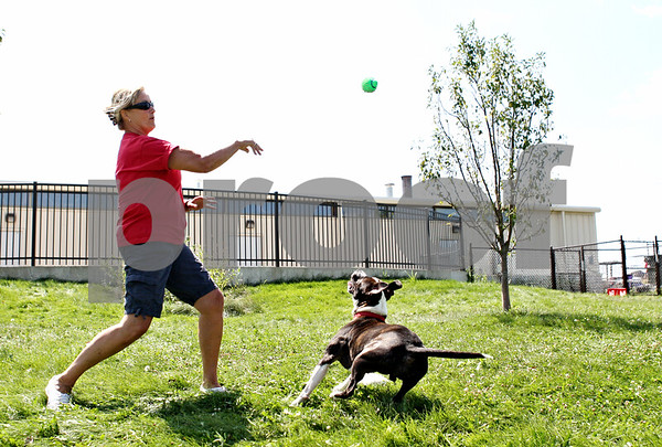 Rob Winner  -  rwinner@daily-chronicle.com<br /> <br /> TAILS Humane Society volunteer Carol Smith tosses a ball for Mike, a pit bull which is available for adoption, on Wednesday August 25, 2010 in DeKalb, Ill.