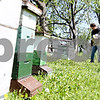 Rob Winner – rwinner@daily-chronicle.com<br /> <br /> Steve Bock, of Honey Hill Orchards in Waterman, Ill., watches the activity of one of the honeybee hives as worker bees enter and leave the colony on Friday May 14, 2010.