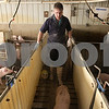 Kyle Bursaw – kbursaw@daily-chronicle.com<br /> <br /> Ed Arndt Jr. leads some young pigs to another area of the farm at E&E Arndt farms in Malta, Ill. on Thursday, Jan. 20, 2011.