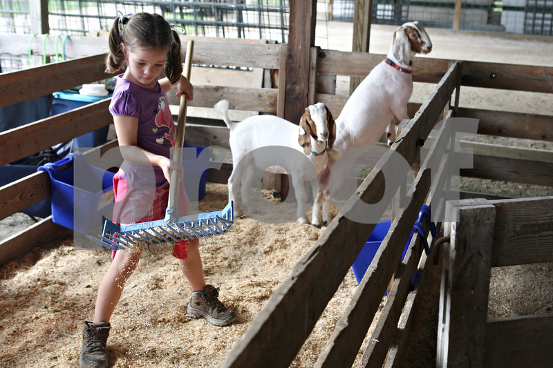 Rob Winner – rwinner@daily-chronicle.com<br /> <br /> 7-year-old Della Harrod, of Hinckley, spends time with her boer goats in a pen at the Sandwich Fairgrounds on Saturday during the 4-H Livestock Fair.
