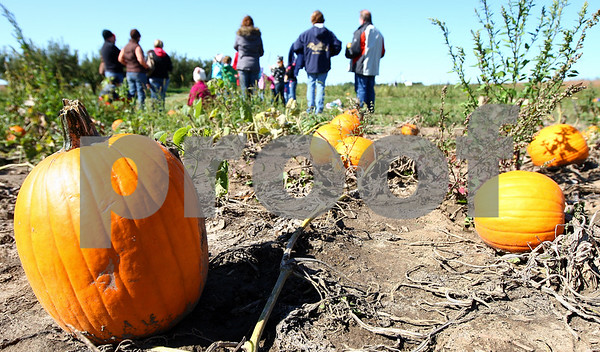 Kyle Bursaw – kbursaw@shawmedia.com<br /> <br /> A group finished picking out their pumpkins waits for the wagon to come pick them up next to a pumpkin patch at Honey Hill Orchard in Waterman, Ill. on Saturday, Oct. 1, 2011.