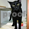 TAILS Humane Society was promoting the adoption if its 10 black cats and 22 black dogs by running a Black Friday sale. In the first two hours of the sale, five black animals had already been adopted.<br /> <br /> By Nicole Weskerna - nweskerna@shawmedia.com