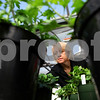 Kyle Bursaw – kbursaw@shawmedia.com<br /> <br /> Kim Mauthe checks on some of her plants in a greenhouse at Kishwaukee College during her fall crops class on Tuesday, Nov. 1, 2011. Mauthe chose to go back to school in fall of 2007, eight years after she received her bachelor's degree, because she wanted to pursue a job that was more satisfying. She is set to graduate in May 2012 with associate's degrees in nursery, greenhouse and landscape design.
