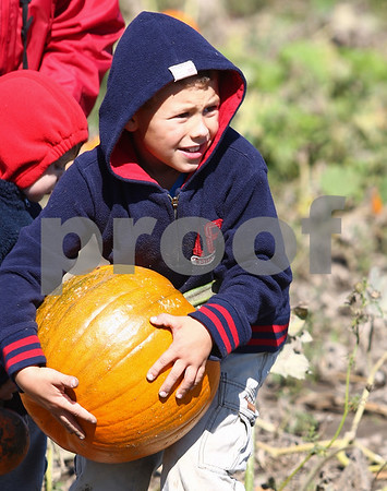 Kyle Bursaw – kbursaw@shawmedia.com<br /> <br /> Ethan Bell, 8, pushes his grandmother's rule that he has to be able to carry the pumpkin he chooses to the limits, bracing his selection against his legs while trying to get it out of the pumpkin patch at Honey Hill Orchard in Waterman, Ill. on Saturday, Oct. 1, 2011.