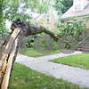 "Curtis Clegg – cclegg@shawsuburban.com<br /> <br /> A tree damaged in this morning's storm covers the front lawn at 745 S. 3rd Street in DeKalb, Illinois on Monday, July 11, 2011. ""It just missed our power line,"" homeowner Gene Powers said. ""I head a little bit of creaking and groaning and then a big smash,"" Powers' son, Aidan, 9 said. The house suffered minimal damage."