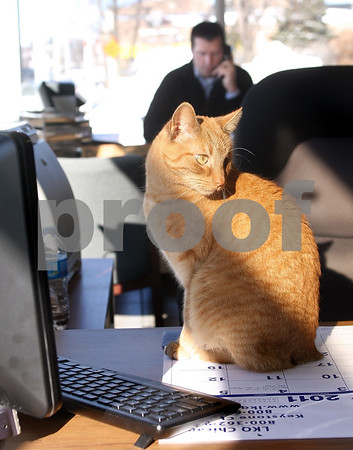 Kyle Bursaw – kbursaw@daily-chronicle.com<br /> <br /> Lucky, the resident cat at Tom Sparks Automotive of DeKalb, sits on a desk as General Manager Dan Gailey makes a phone call in the background on Friday, Feb. 4, 2011. Sparks took in Lucky, who is missing an eye and  his tail in October of 2010 when Lucky began hanging around their lot.