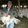 Rob Winner – rwinner@shawmedia.com<br /> <br /> Robert Kauffman, owner of Kauffman Turkey Farms, controls a 40-pound turkey while working on his farm on Tuesday afternoon in Waterman.