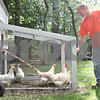 Rob Winner – rwinner@daily-chronicle.com<br /> <br /> Steve Rease feeds his DeKalb Amberlink chickens that live in a chicken coop in the backyard of his home in the Stone Creek subdivision of Genoa on Monday afternoon.