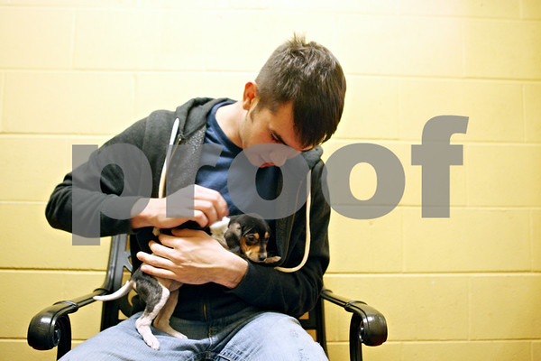 Rob Winner – rwinner@shawmedia.com<br /> <br /> Logan Cauffman, of Sycamore, spends time with a Dachshund mixed breed puppy at TAILS Humane Society in DeKalb on Friday. Cauffman's mother Tracy brought him to TAILS to find a new pet for Christmas.