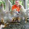 Rob Winner – rwinner@daily-chronicle.com<br /> <br /> On Monday afternoon, Genoa resident Steve Rease feeds his DeKalb Amberlink chickens who live in a chicken coop in the backyard of his home in the Stone Creek subdivision.