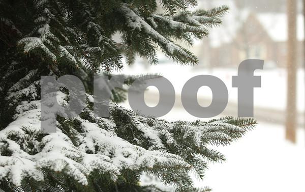 Kyle Bursaw – kbursaw@shawmedia.com<br /> <br /> A tree in Sycamore gathers snow on Thursday, Jan. 12, 2012.