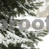 Kyle Bursaw – kbursaw@shawmedia.com<br /> <br /> A tree in Sycamore gathers snow on Thursday, Jan. 12, 2012.