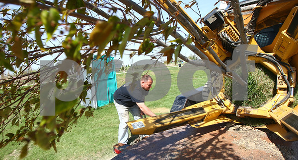 Kyle Bursaw – kbursaw@shawmedia.com<br /> <br /> Chad Knutson, co-owner of Knutson Lawncare and Home Services, secures a Bobcat holding a tree to a trailer for transport. The tree is one of the nearly 50 being transplanted to the area around the soccer fields at Huntley Middle School in DeKalb, Ill. on Wednesday, April 4, 2012.