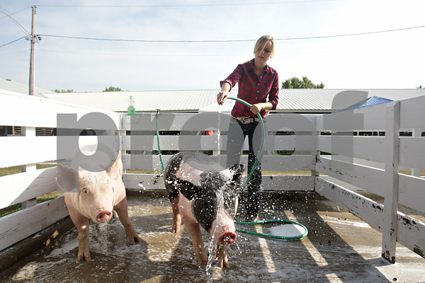 Rob Winner – rwinner@shawmedia.com<br /> <br /> Sydney Bend, 18 of Earlville, hoses off two of her swine Saturday morning during the DeKalb County County 4-H Fair at the Sandwich Fairgrounds. Bend has been apart of 4-H for 10 years and started with a bucket calf, but now only raises swine.