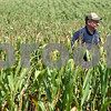 Kyle Bursaw – kbursaw@shawmedia.com<br /> <br /> DeKalb farmer Jamie Walter, who is 5 feet 9 inches tall, stands well above the corn in a nearby field on Tuesday, Aug. 14, 2012. The hot and dry weather has left local corn crops shorter than they would be under favorable weather.