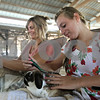 Rob Winner – rwinner@shawmedia.com<br /> <br /> Rachel Hughes (right), 13 of Genoa, and her mother Mollie Hughes brush two of Rachel's small breed rabbits before judging during the DeKalb County 4-H Fair at the Sandwich Fairgrounds on Saturday.